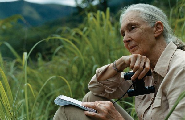 leadership profile jane goodall Parental engagement in children's learning school leadership and management teachers' continuing professional development the place of faith/belief in parental engagement willing to supervise phd i would be happy to discuss supervision of doctoral work aligned to any of my research interests education.